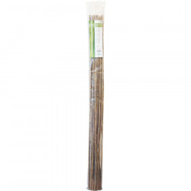 Bamboo 150 cm pack de 25 pc