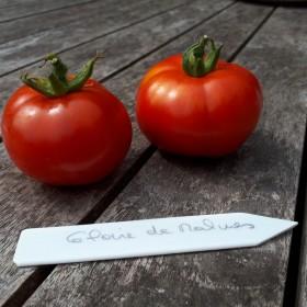 Tomate Gloire de Malines Semailles
