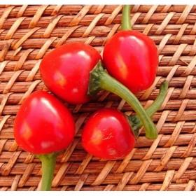 Poivron doux Sweet Cherry