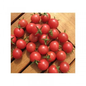 Tomate cerise Rose Quartz Multiflora Semailles