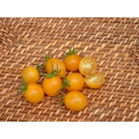 Tomate cerise Jaune Cocktail Clementine