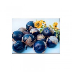 Physalis Tomatillo violet