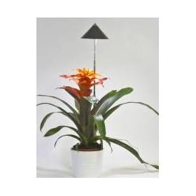 Lampe LED télescopique Sunlite anthracite