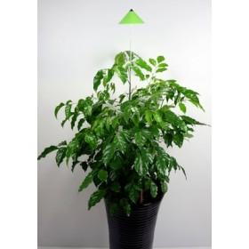 Lampe LED télescopique Sunlite green