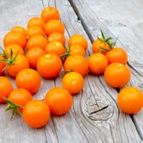 Tomate Cerise Orangette Semailles