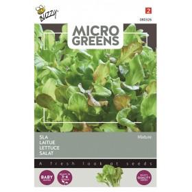 Salade mélangée micro-pousses