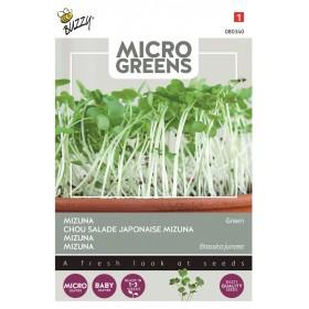 Salade Japonaise Mizuna Bio