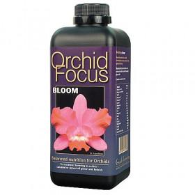 Orchid Focus  Floraison 1ltr
