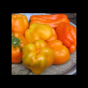 Poivron doux orange Ariane