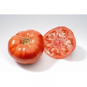 Tomate Marmande Semailles