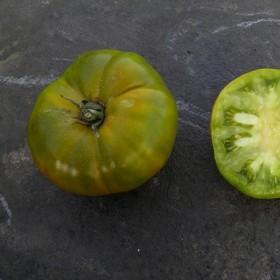 Tomate Verte de Huy Semailles