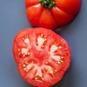 Tomate Triomphe de Liège Semailles