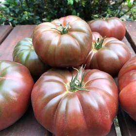 Tomate Noire de Crimée Semailles