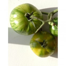Tomate Green Zebra Semailles