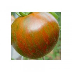 Tomate Black Zebra Semailles