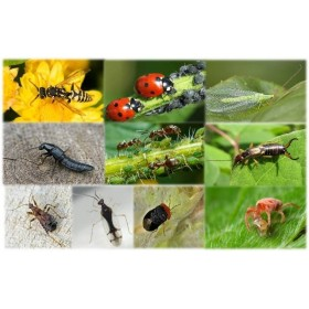 Insectes Auxiliaires