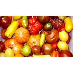 Tomates régionales belges