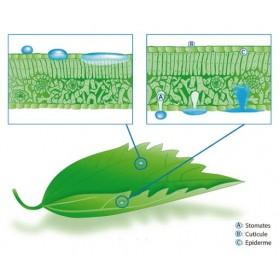 Engrais foliaires